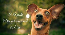Dia internacional dos Cães separamos as melhores imagens