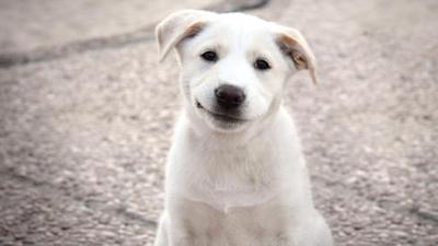 Dia internacional dos Cães 9