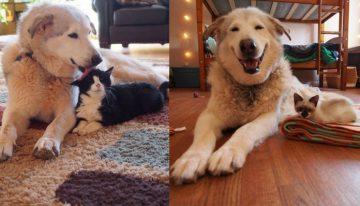 Gatinhos trazem o sorriso de volta ao cão solitário que perdeu seu amigo