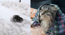 Homem para seu carro para salvar gatinho congelado e coberto de neve