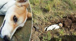 Cão é envenenado ao tentar livrar sua casa de criminosos