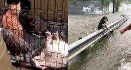 Voluntários de Houston ficam para ajudar animais das inundações