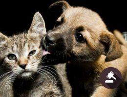 Estado americano permite 'advogados' de cães e gatos em tribunal