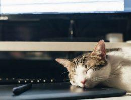 Empresa permite que funcionários levem gatos para o trabalho