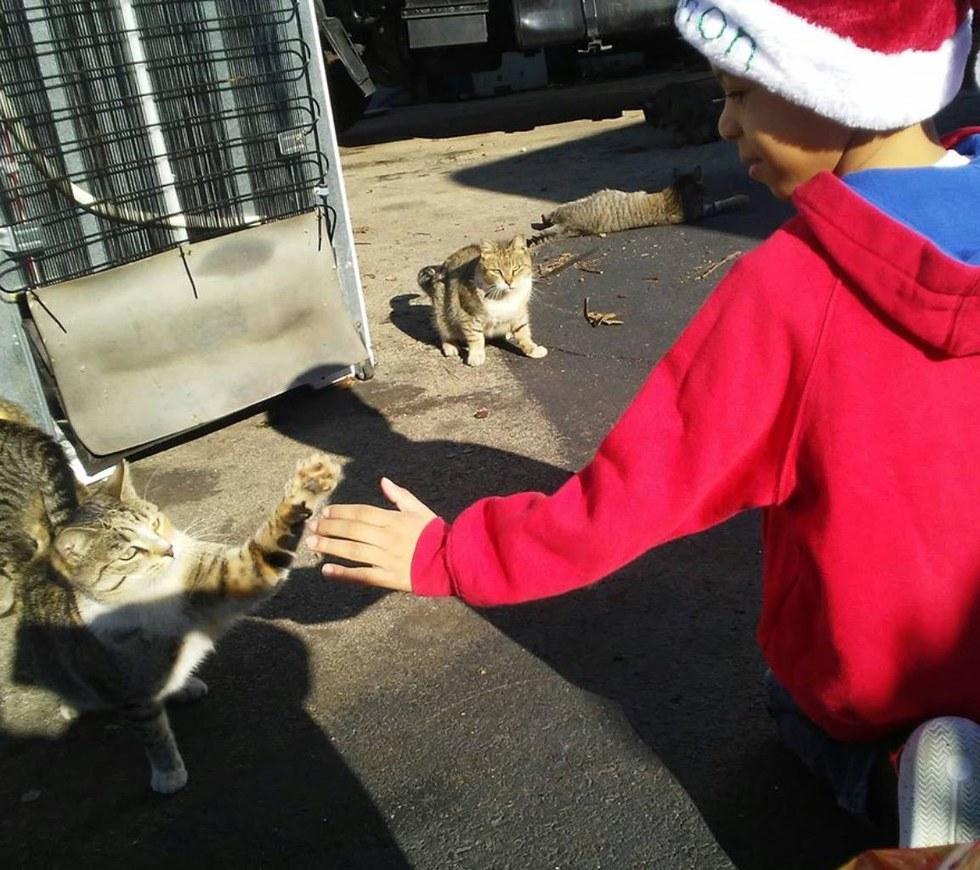 gatos de rua 6