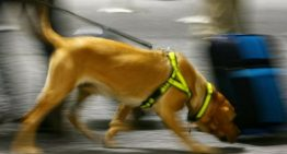Cão encontra idosa desparecida que tinha engarrafado seu próprio cheiro