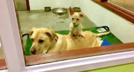 Cães resgatados são amigos inseparáveis | Portal dos Cães e Gatos