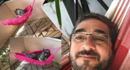 Gatinha ganha mini rede e foto viraliza nas redes sociais