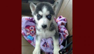 Criador percebe cão com necessidades especiais e o leva para eutanásia