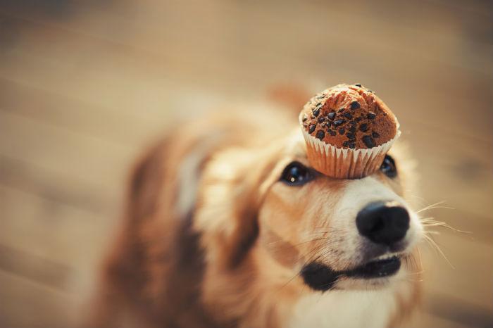 alimentos que você jamais deve dar ao seu cachorro