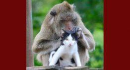 Macaco que foi salvo de um restaurante adota gato e vira melhor amigo