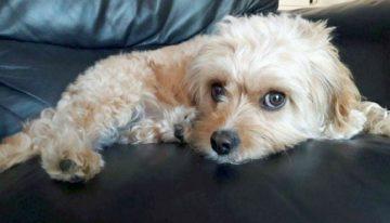 Morte de cadelinha serve de alerta aos riscos em determinados alimentos