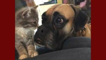 Cachorro adota gato achado em motor de um veículo
