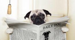 5 dicas infalíveis p/ ensinar seu cachorro a fazer xixi e cocô no lugar certo