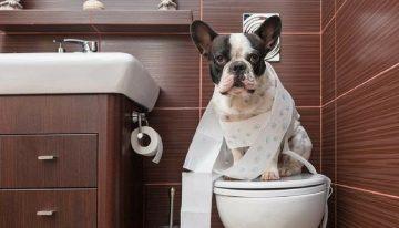 Causas pelas quais seu cão está fazendo xixi no lugar errado
