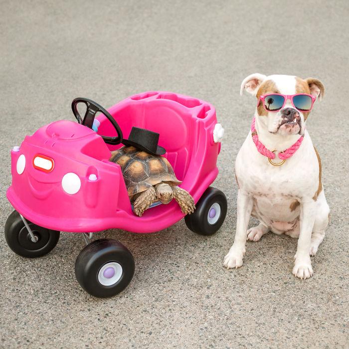 cão e uma tartaruga