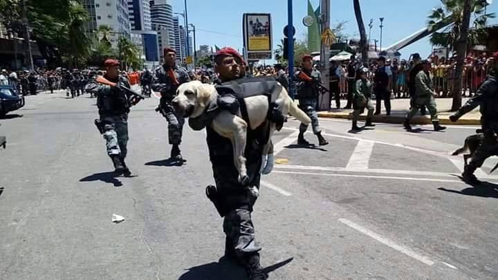 cachorro nos braços