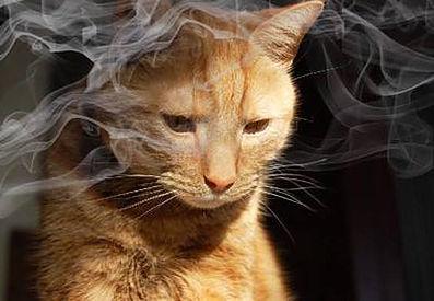 jamais deve fazer com seu gato