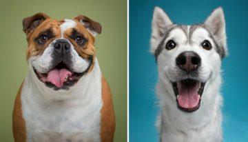 Retratos revelam as peculiares qualidades humanas em diferentes cães