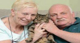 Morre o gato mais velho do mundo e a idade dele irá te surpreender