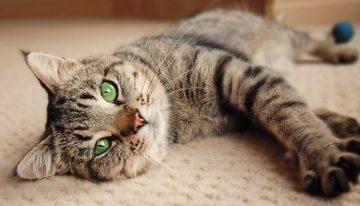 Muita atenção: 5 coisas que você jamais deve fazer com seu gato
