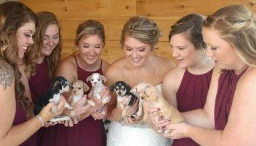 Noiva troca buquê por filhotes de cachorros resgatados