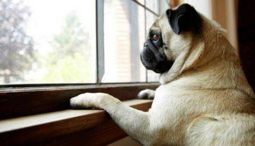 Dicas: Como lidar com a ansiedade de separação em cães