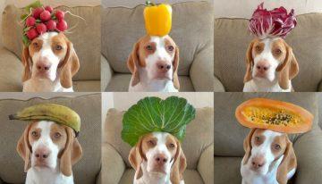 Verduras e legumes PERMITIDOS para cachorros