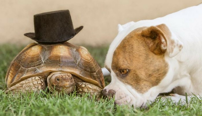 Amizade entre um cão e uma tartaruga é a coisa mais doce que você verá hoje