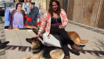 Cãozinho famoso por roubar empanada ganha um lar e Royal Canin grátis por 1 ano