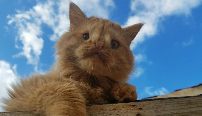 Felino foi rejeitado por ter aparência incomum dos outros gatos