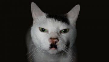 10 Gatos que são famosos por suas marcas inusitadas no pelo