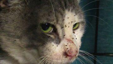 Mais de 40 felinos são resgatados em uma casa abandonada