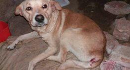 Cachorro é estuprado em Porto Alegre e gera revolta nas redes sociais