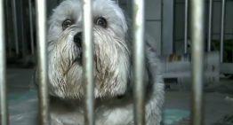 """Justiça ordena retirada de cordas vocais de cães por """"latirem demais"""" em Curitiba"""