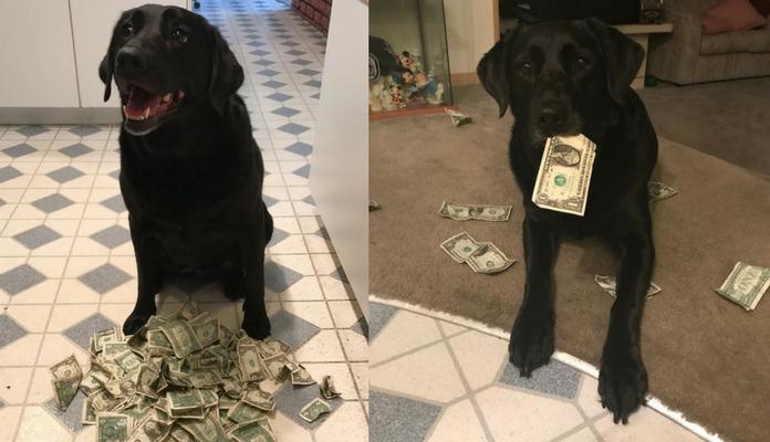 Conheça Holly, a cadelinha que é apaixonada por dinheiro