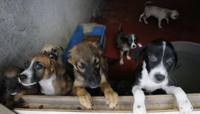 Abrigo em Fortaleza vai receber ajuda de R$ 100 mil por ano da Prefeitura