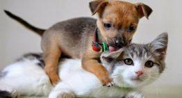 Prefeitura do Recife realiza feira de adoção de cães e gatos neste domingo