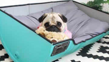 Faz mal dormir com o cachorro na cama? Portal dos Cães e Gatos
