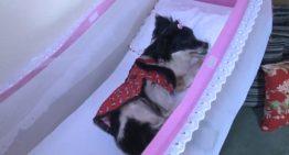 Cadelinha é jogada em lixão e fica tetraplégica após dona ser ameaçada