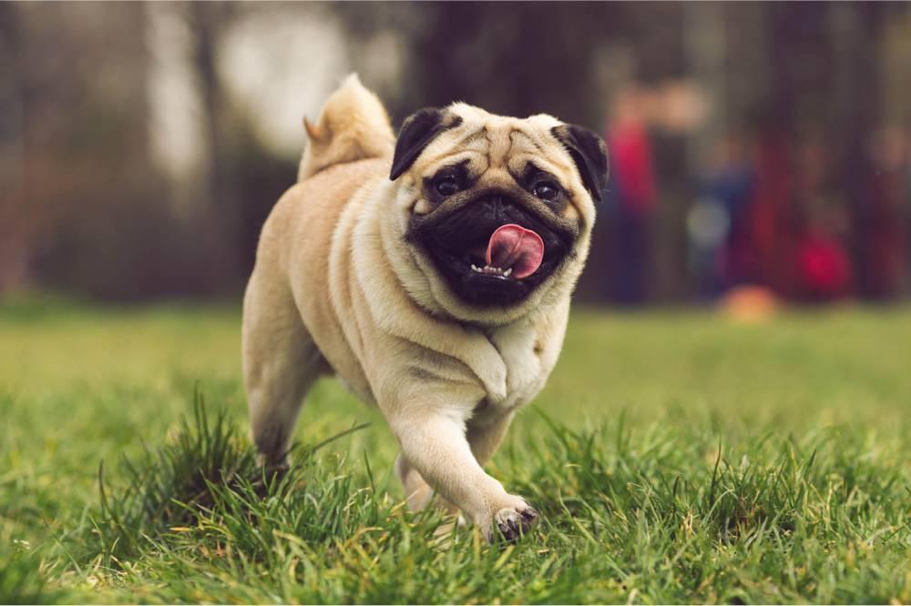 cachorros que vivem mais