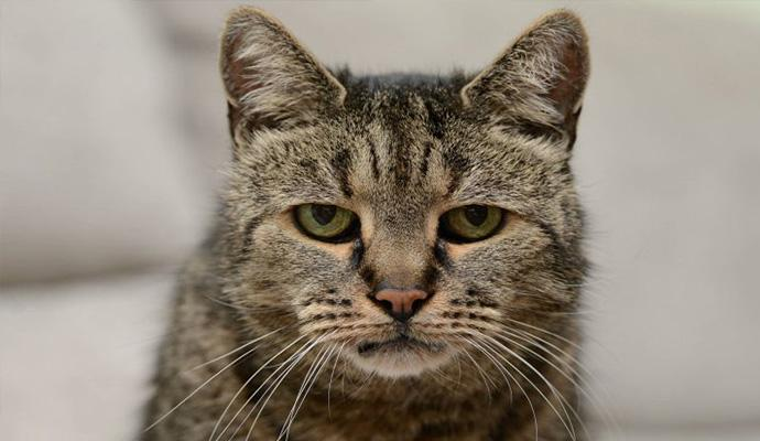 gato mais velho