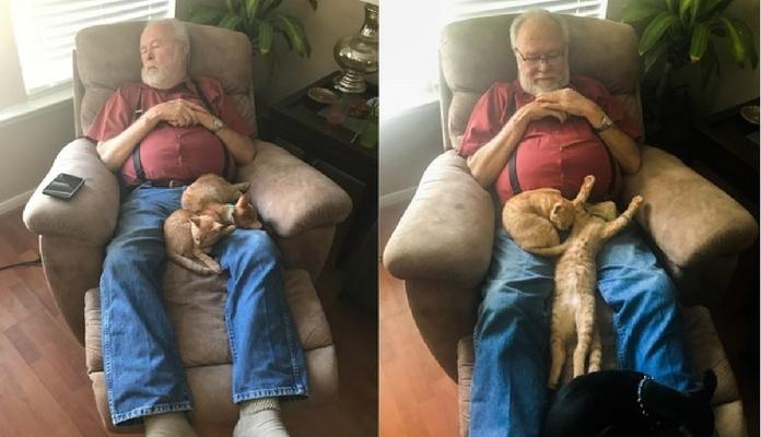 Gatinhos resgatados se recusam a deixar o colo do vovô