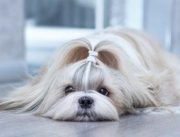8 motivos para você desistir de cruzar a sua cadela
