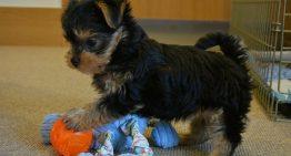 Criador percebe cegueira em cão e o leva para eutanásia – Em seguida vem a esperança