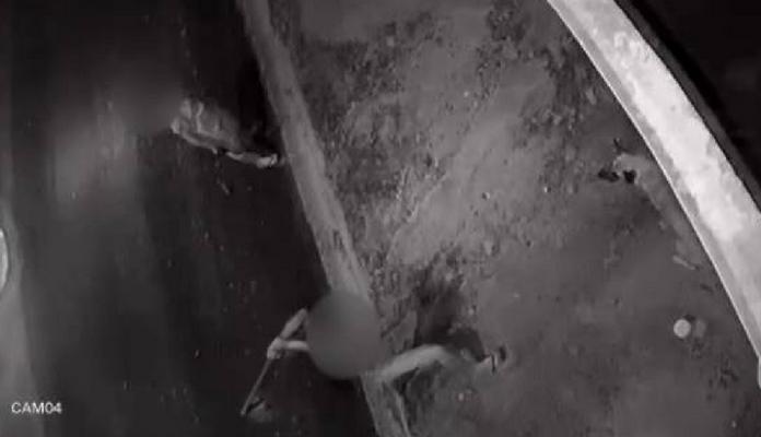 Cachorro é apedrejado e golpeado com enxada em Atibaia (SP); veja o vídeo