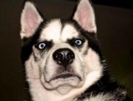 Será que o seu cachorro tem capacidade de te enganar?