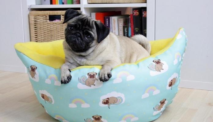 3 dicas infalíveis para fazer seu cão dormir na cama dele