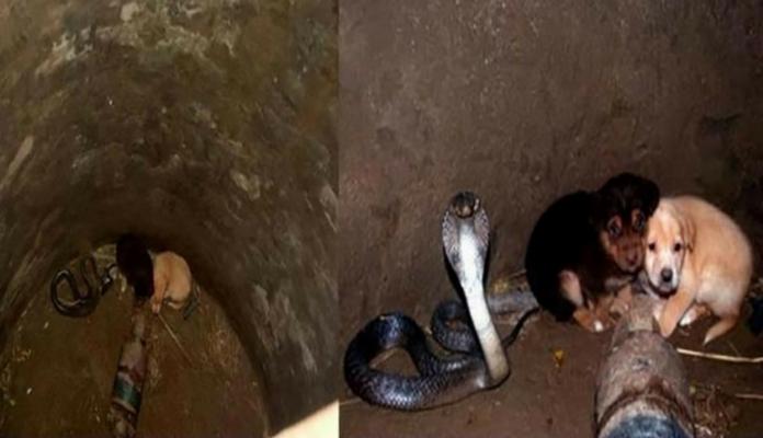 Cães caem em buraco onde havia uma serpente – algo incrível acontece