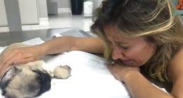 Luisa Mell entra na Justiça pela guarda dos cães resgatados